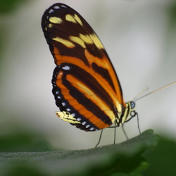 vlinder ...