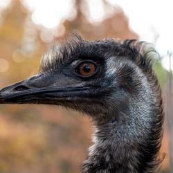 emu door carina meijer panasonic lumix S1