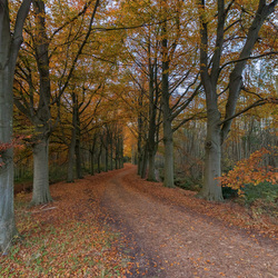 Herfst in Holland