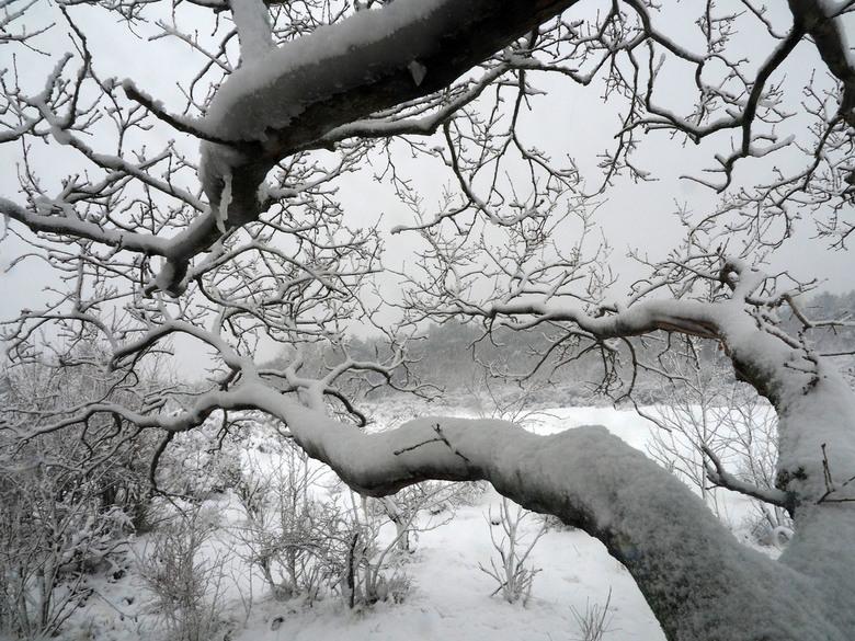 toen het zo sneeuwde