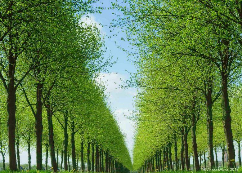 - Green Perspective -  - Het frisse lentegroen in het noorden van Nederland in de maand mei. Al liggend op de grond het groene perspectief geprobeerd
