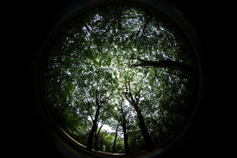 bomen - lensbaby fisheye