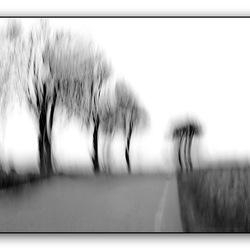ART IMPRESSION OF TREES.