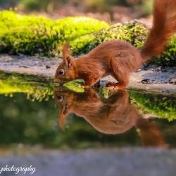 Reflectie van een Eekhoorn