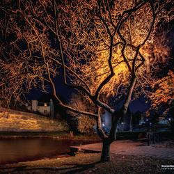 Mooie boom in het stadspark van Maastricht in de avond