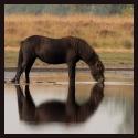 De Beste Paardenfoto's