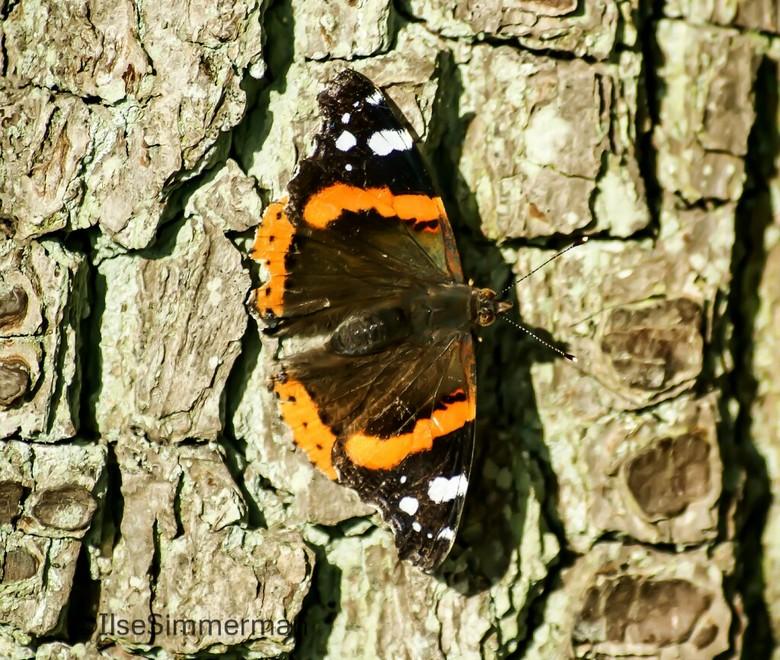Vlinder op boom -
