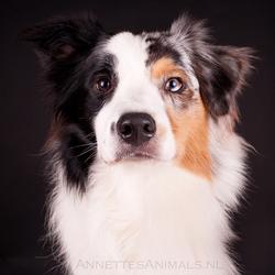Twee honden, 1 portret