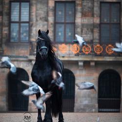 Fries paard op de Dam