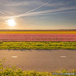 Kleurrijke tulpenvelden