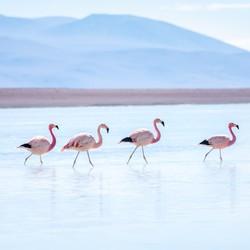 File op de Laguna Blanca
