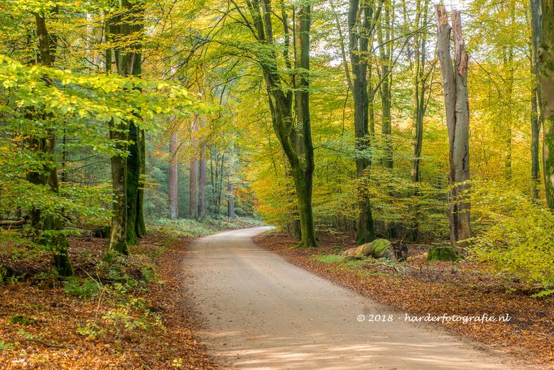 Wandelen in het speulderbos - Het Speulderbos is prachtig om te wandelen, zeker met de herfstkleuren.