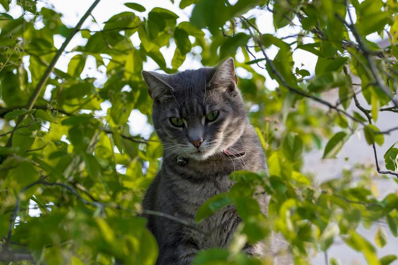 mac kat van de buren -