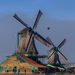 Molens met vogel, Zaanse Schans, Zaandam