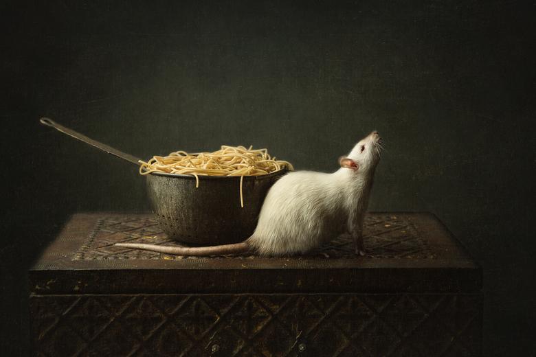 rat met pasta - ratje met pasta<br /> <br /> Dit ratje ging er ineens zo mooi voor zitten, gelukkig op het juiste moment een foto kunnen maken!