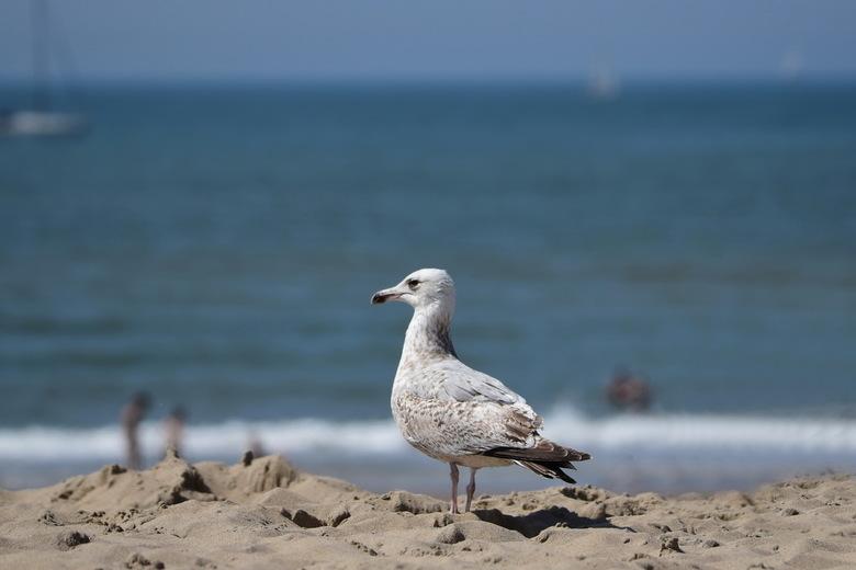 Een middag aan zee - Een middag naar zee, wandelen door de duinen, over het strand, in de haven. En als kers op de taart een visje eten bij de Dagviss