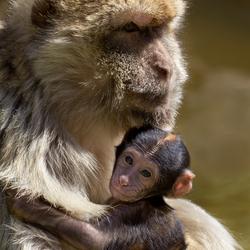 Berbermoeder en kind
