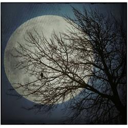 Zie De Maan Schijnt Door De Bomen..