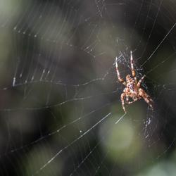 spinnentijd
