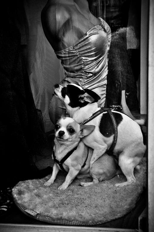 Doggystyle... - Uit mijn serie: 'Streetdogs'