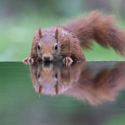Spiegeltje, spiegeltje!