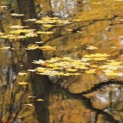 Herfst bladeren  in het water