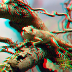 Reptile Blijdorp Zoo Rotterdam 3D