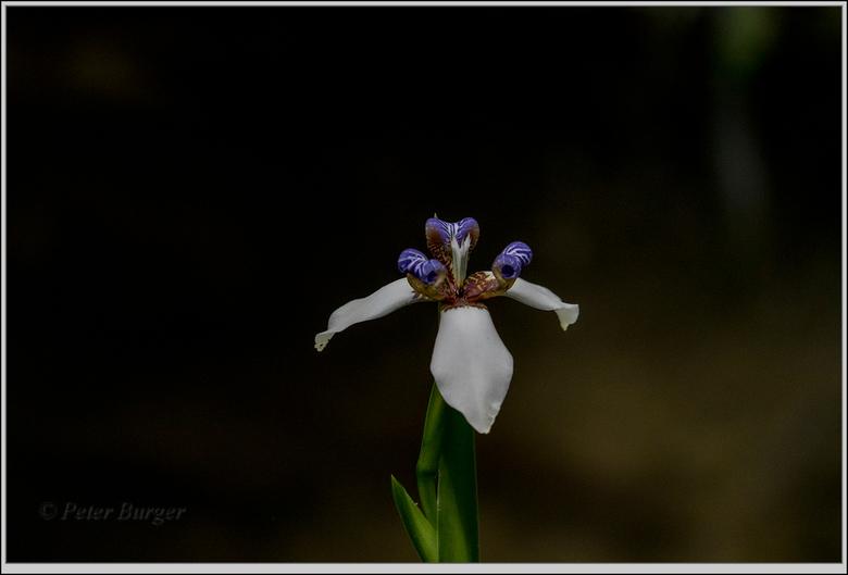 orchidee - orchideeënhoeve