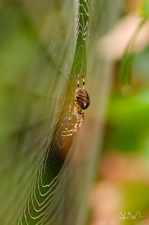 Herfst - Op zaterdagmorgen een mooie herfstfoto gemaakt. Het was een beetje mistig, wat een mooi effect geeft op het spinnenweb. Ver hoefde ik er niet