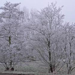 Winterbomen