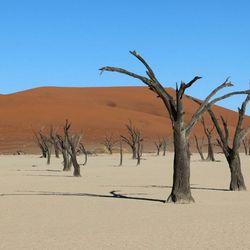 dead vlei - dossier - namibia