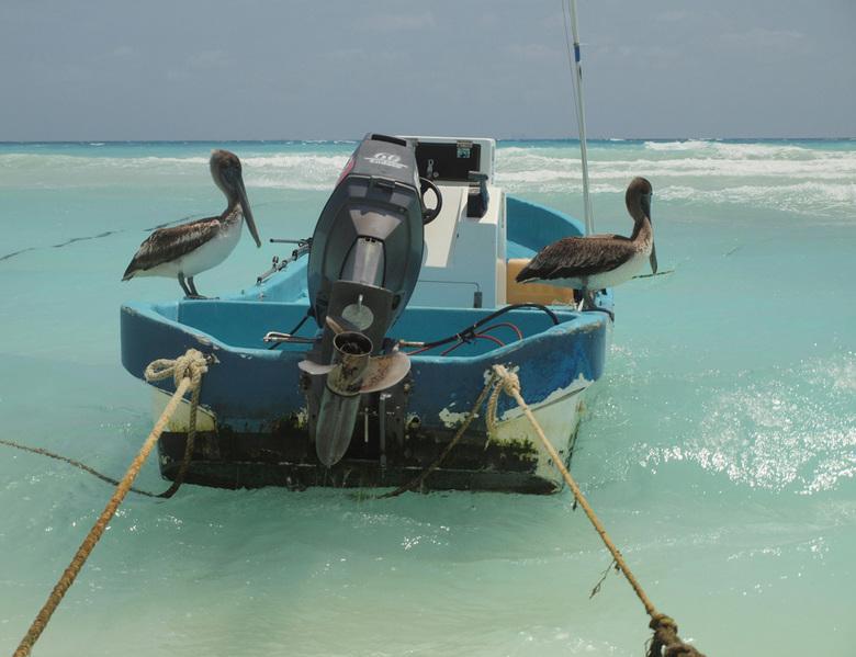 vis liefhebbers op de boot - een beetje natuur op het strand tussen de mensen. Pelikanen kunnen zich prima aan zo'n omgeving aanpassen. Het water