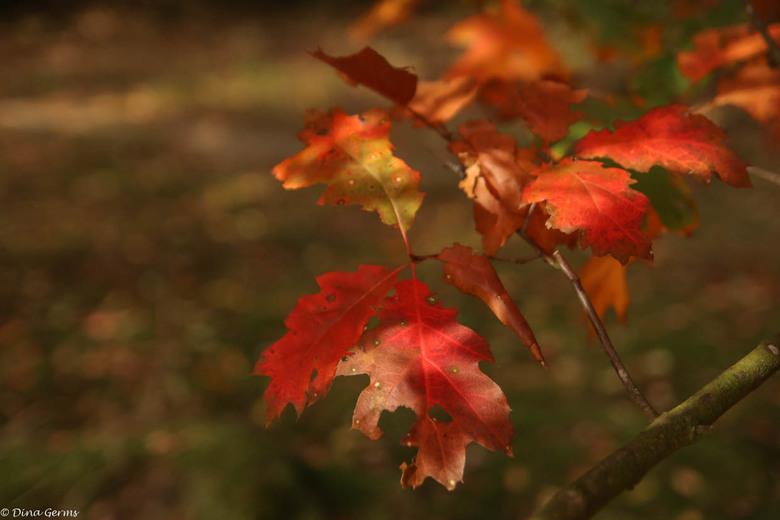 Herfst - Gisteren genoten van de mooie herfstkleuren in het bos.<br /> <br /> Bedankt voor het kijken en de reacties op mijn vorige upload.