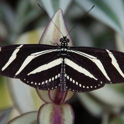 Botanische vlindertuin