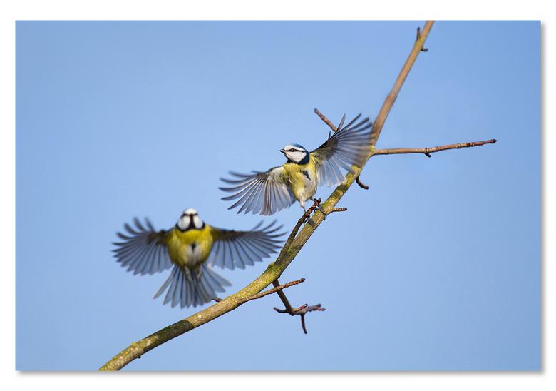 Love is in the air - Pimpels waren druk in de weer met elkaar. Voorjaar in de lucht?