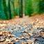 Liever bladeren dan beren op de weg...