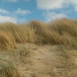 Storm in de duinen