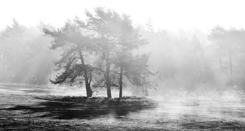 Misty Business -