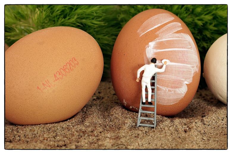 Egg - Ei