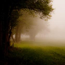 Door de mist, de bomen niet meer zien.