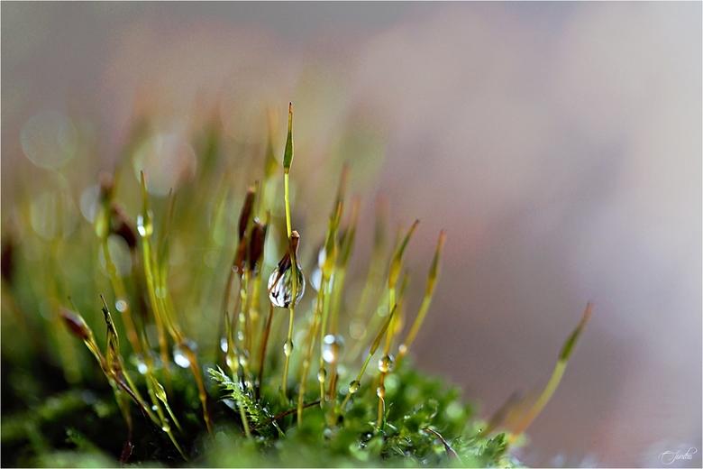 Charme van de regen -