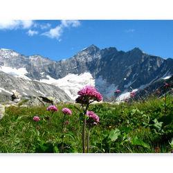 Alpenflora II