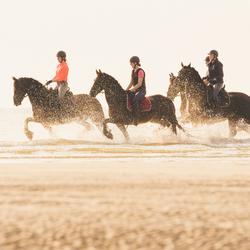 Paarden aan de kust