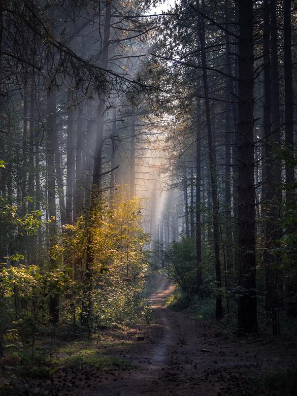 Forest walk  -