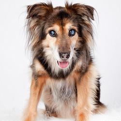 Daisy - het 15-jarige hondje....