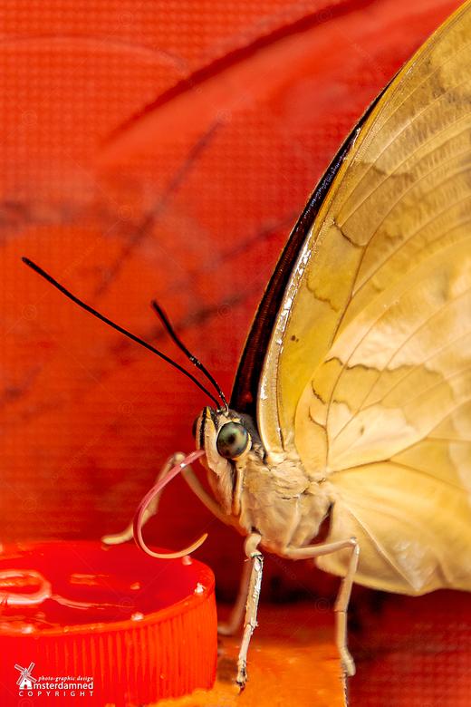 Vlinders aan de Vliet - Geen idee welke vlinder het is, maar gefotografeerd bij Vlinders aan de Vliet in Leidschendam. Normaal fotografeer ik het lief