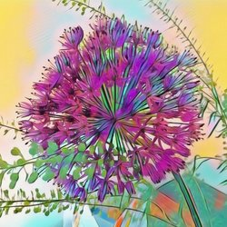 Allium een Sierui. .