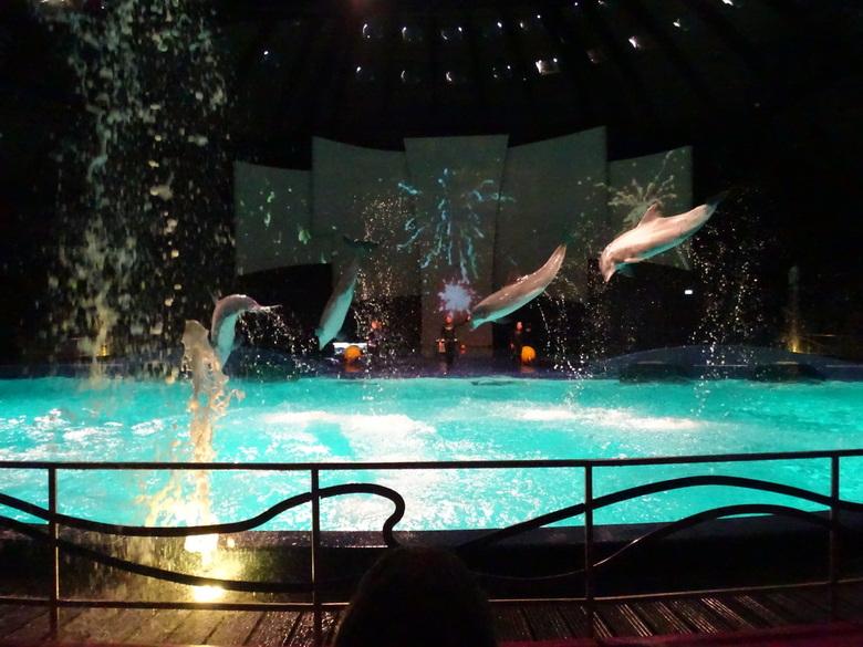 Vliegende dolfijnen