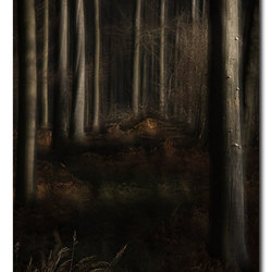 Obscure Woods