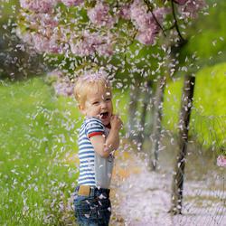 een regen van bloesem